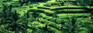 Bali-Rizieres