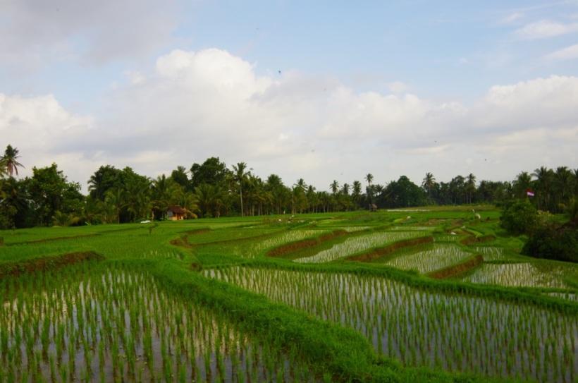 balade rizieres 10 août 121