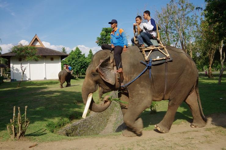 au détour d'un chemin... 1ère rencontre avec le célèbre pachyderme d'Asie