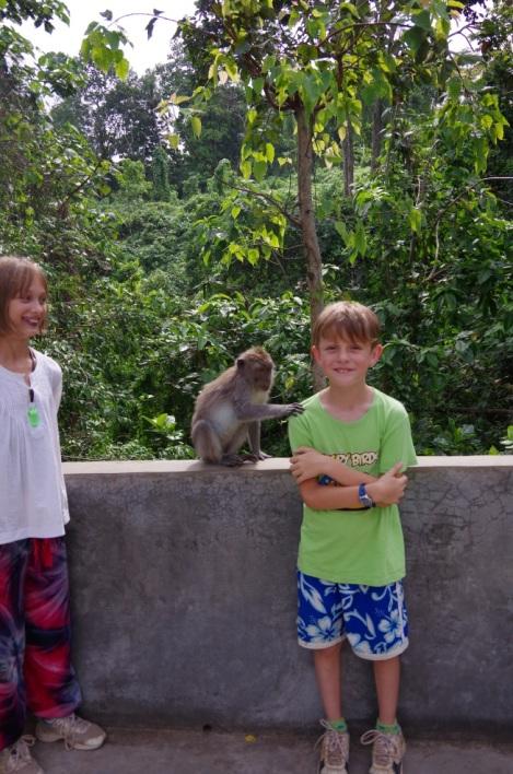 Ubud rizières et Monkey forest 167