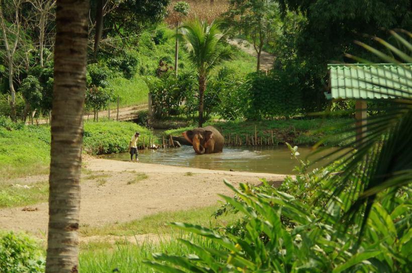 éléphants Chiang Mai 007