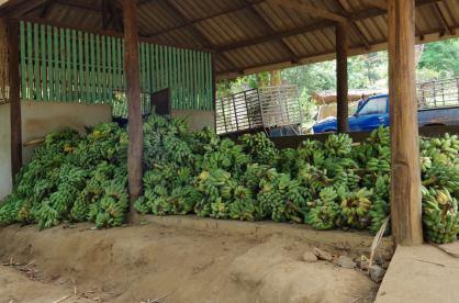 éléphants Chiang Mai 070