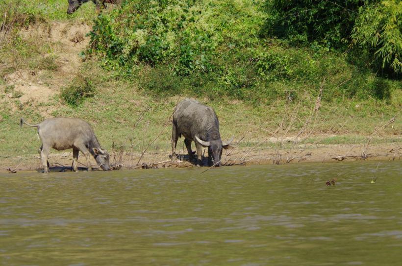 Thaton trek et descente de la rivière Kok 675