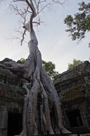 Angkor J4 012