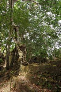 Angkor J5 188