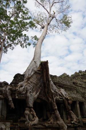 Angkor J5 194
