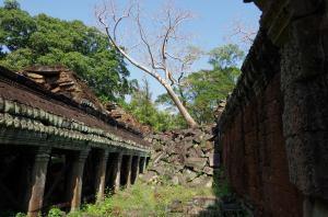 Angkor J5 271